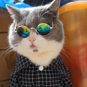 แว่นตาแฟชั่น หมา