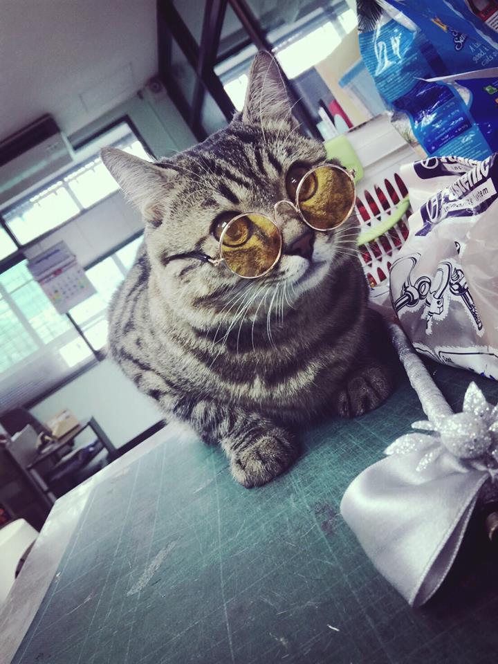 อุปกรณ์ แต่งตัวแมว