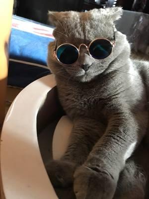 แว่นของแมว