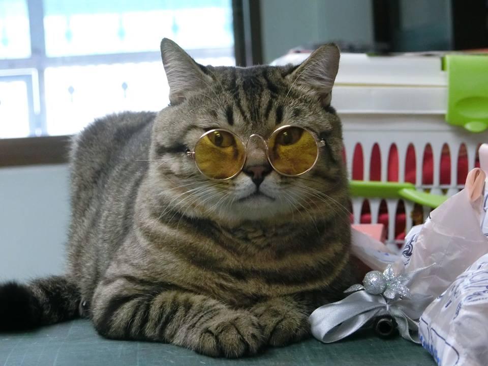 แว่นตาสำหรับแมว