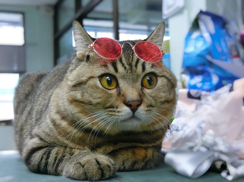 ชุดแมว