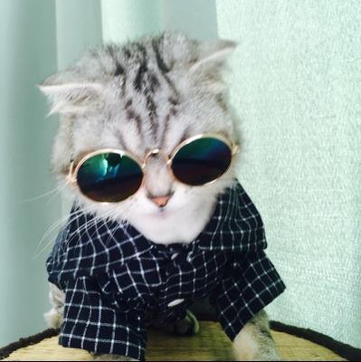 เสื้อผ้าแมว