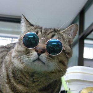 แว่นแมว