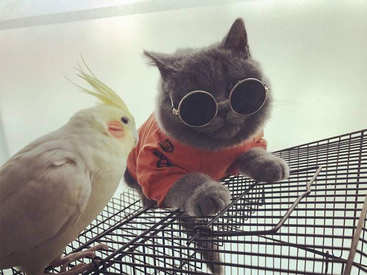 ชุดเสื้อผ้าแมว