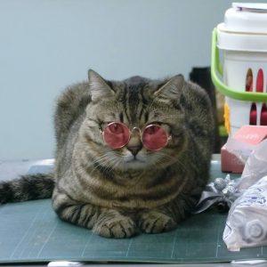 แต่งตัวแมว