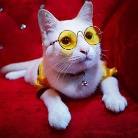 แว่นตาแมว