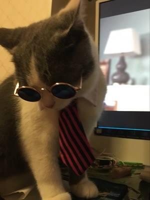 แว่นตากันแดด แฟชั่น แมว