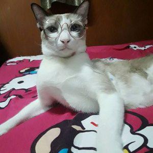 แว่นสายตาแมว