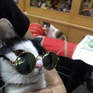 แว่นตาแต่งตัวแมว