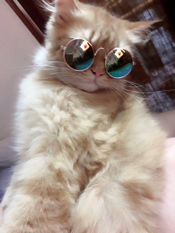 ชุดของแมว