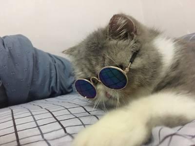 แว่นตาแฟชั่น แมว