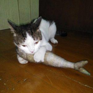 แคทนิปแมว หมอนแคทนิป