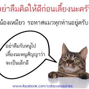 การเลี้ยงแมวคิดก่อนเลี้ยง