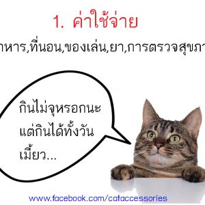 การเลี้ยงแมว ค่าใช้จ่าย