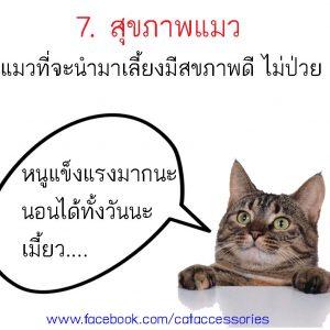 การเลี้ยงแมว สุขภาพ