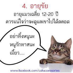 การเลี้ยงแมว อายุขัย