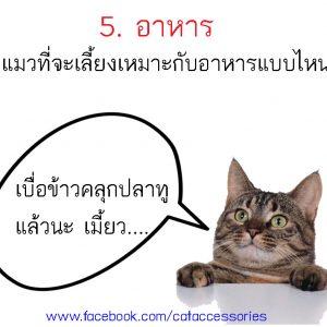 การเลี้ยงแมว อาหาร