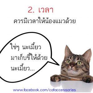 การเลี้ยงแมว เวลา