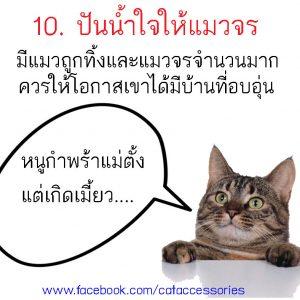 การเลี้ยงแมว แมวจร