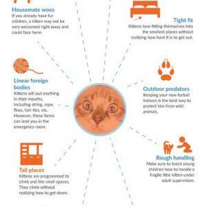 10 เรื่องที่ต้องระวังสำหรับคนเลี้ยงแมว