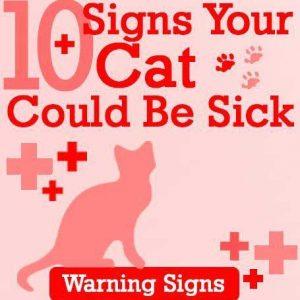 10อาการบอกเหตุแมวป่วย
