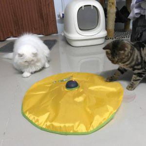ของเล่นแมวหางหนูปริศนา